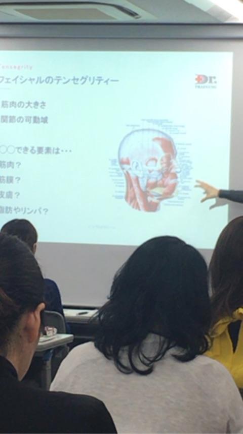 フェイシャル解剖学